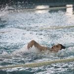 gare-di-nuoto-66