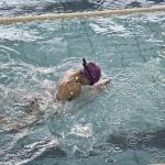 gare nuoto 2015 068.JPG