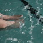 gare di nuoto copertina